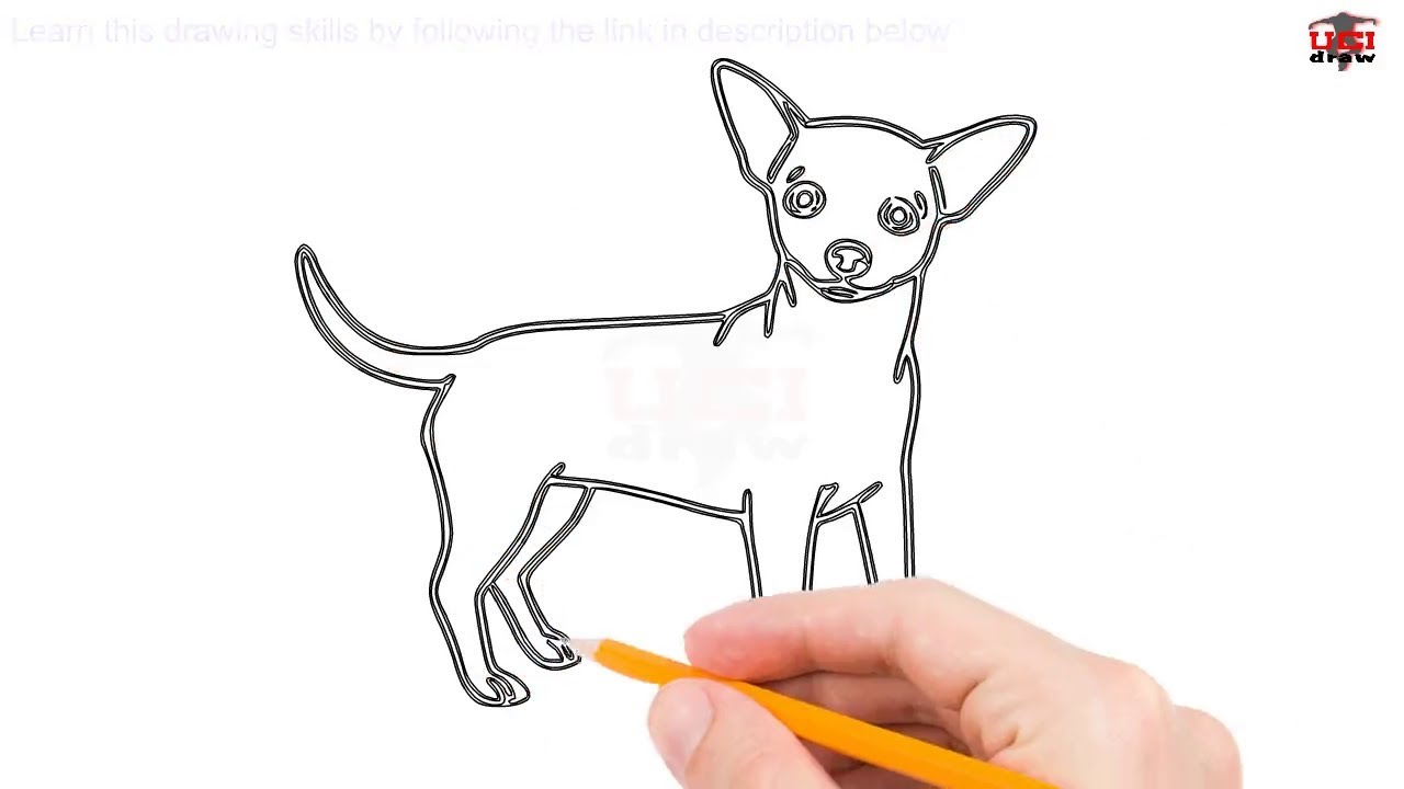 This is an image of Gorgeous Drawing Of Chihuahua