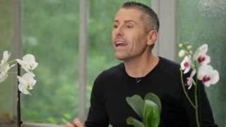 Comment soigner ses orchidГ©es