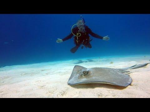 Scuba diving in Grand Turk