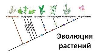 20. Эволюция растений  (6 класс) - биология, подготовка к ЕГЭ и ОГЭ 2018