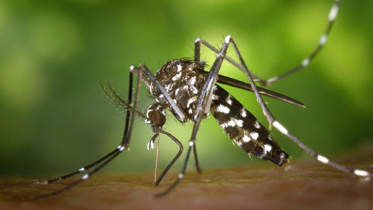 Program Kendalikan Penyakit dengan Melepas Nyamuk yang DNA-nya Diedit, Gagal