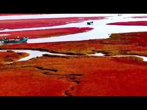 Natural wonders - Red beach Panjin (China)