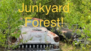 Exploring a country junkyard full of classic cars! I search for a new ride.