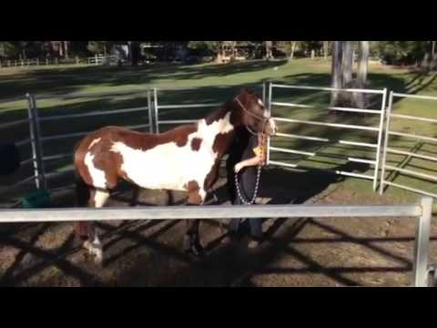 Good n' Green from YouTube · Duration:  49 seconds  · 410 views · uploaded on 13.01.2014 · uploaded by jjperformancehorses