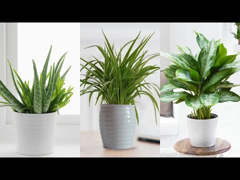 9-of-the-best-house-plants-for-the-kitchen