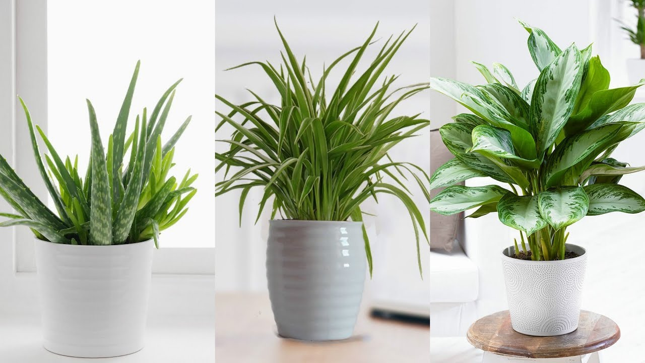 Plants Indoor For The Kitchen
