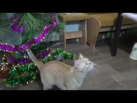 Вопрос: Почему кот любит китекет сухой корм, аж подхрюкивает?