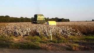 Cotton Harvest at Pickens, Arkansas ... video
