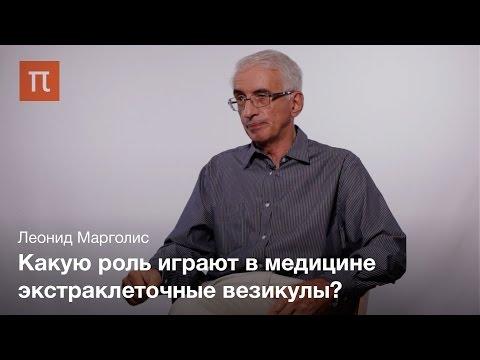 Экстраклеточные везикулы — Леонид Марголис
