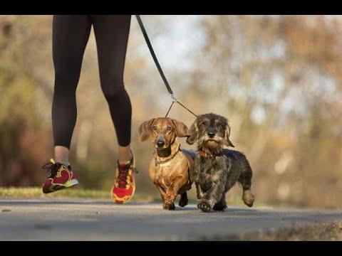 ¿Qué deporte hacer con mi mascota? - HogarTv producido por Juan Gonzalo Angel Restrepo
