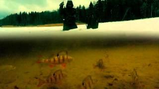 Зимняя Рыбалка на Окуня. Балансир. Глухозимье.  Подводное видео(Зимняя Рыбалка на Окуня. Балансир. Глухозимье. Подводное видео Подводные съемки. Зимняя рыбалка с подводно..., 2016-02-07T09:23:46.000Z)