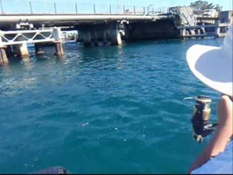 Yellow Tail Kingfish Swansea New South Wales Australia