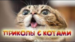 Приколы с кошками и котами 2019. Подборка смешных и интересных видео с котиками и кошечками