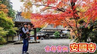 【京都賞楓】2019年 綾部 安國寺 茅草屋與紅葉絕景 在地人的私房景點