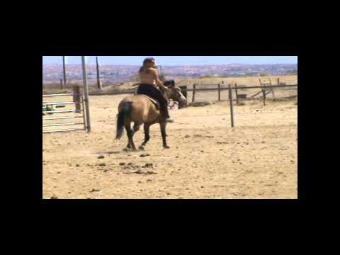 3yo Buckskin Filly - Third Ride