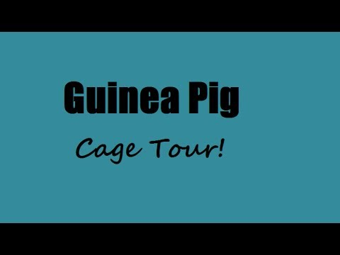 Guinea Pig Cage Tour (STARRING BUDDIE!)