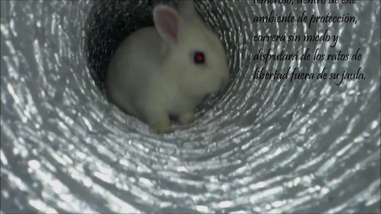 Conejo enano dwarf rabbit t nel para juegos youtube - Casas para conejos enanos ...