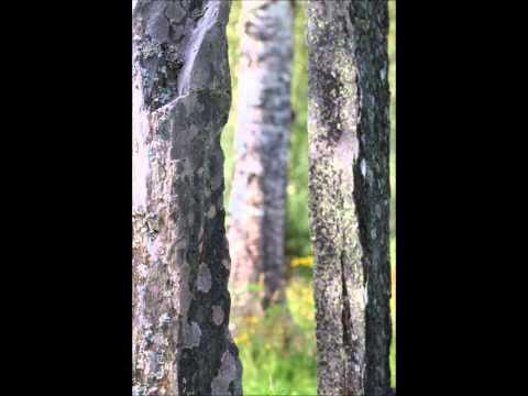 E.Grieg: Peer Gynt Suite No.2 - Jämtlands Sinfonietta/Peter Ligendza