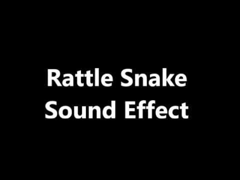 Rattle Snake Sound Effect