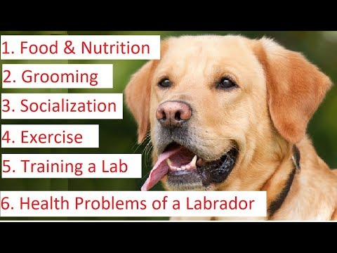 Labrador Retriever 101 - Feeding, Grooming, Socializing, Training and Health Care of a Lab