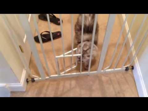 Regalo Dog Gate With Cat Door Demonstration