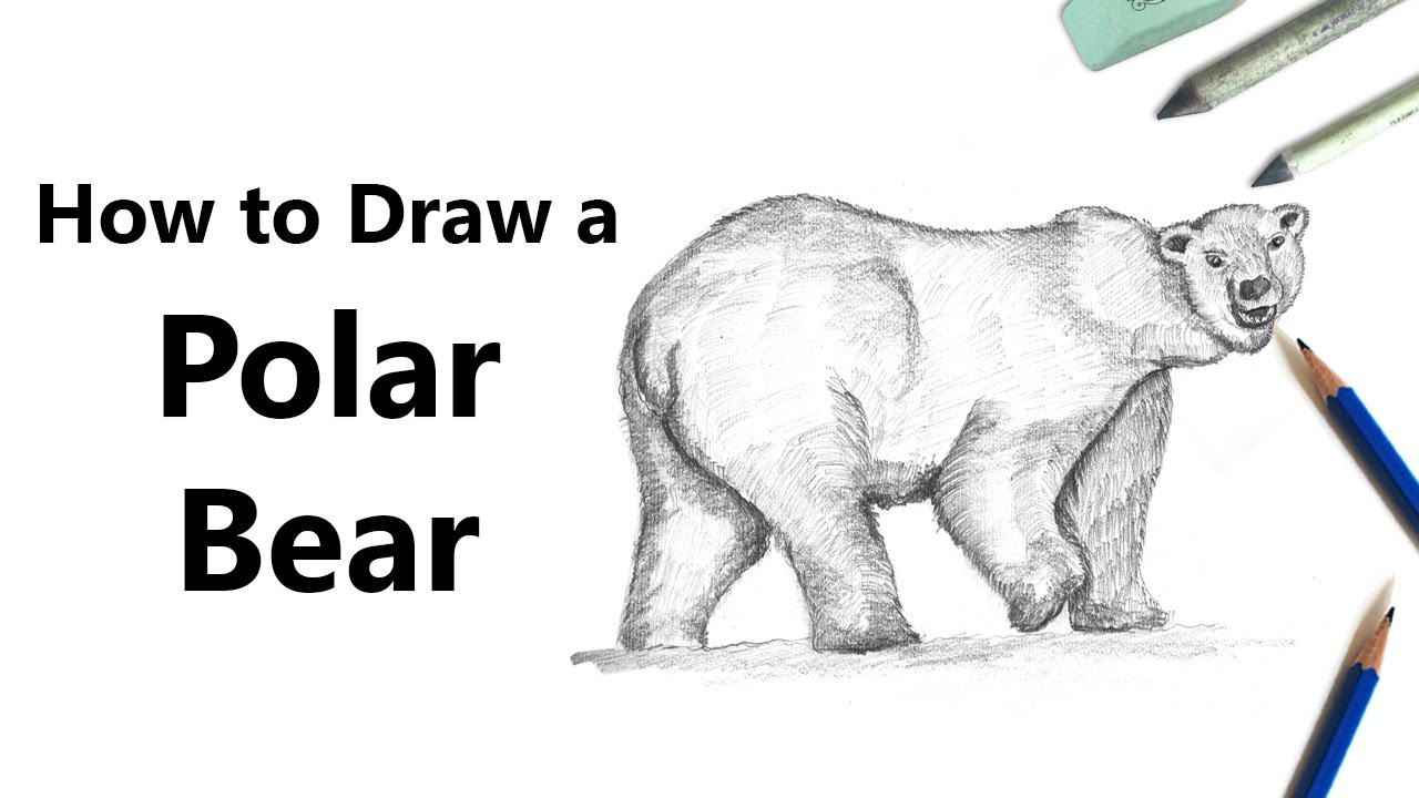 How To Draw A Polar Bear With Pencils Time Lapse