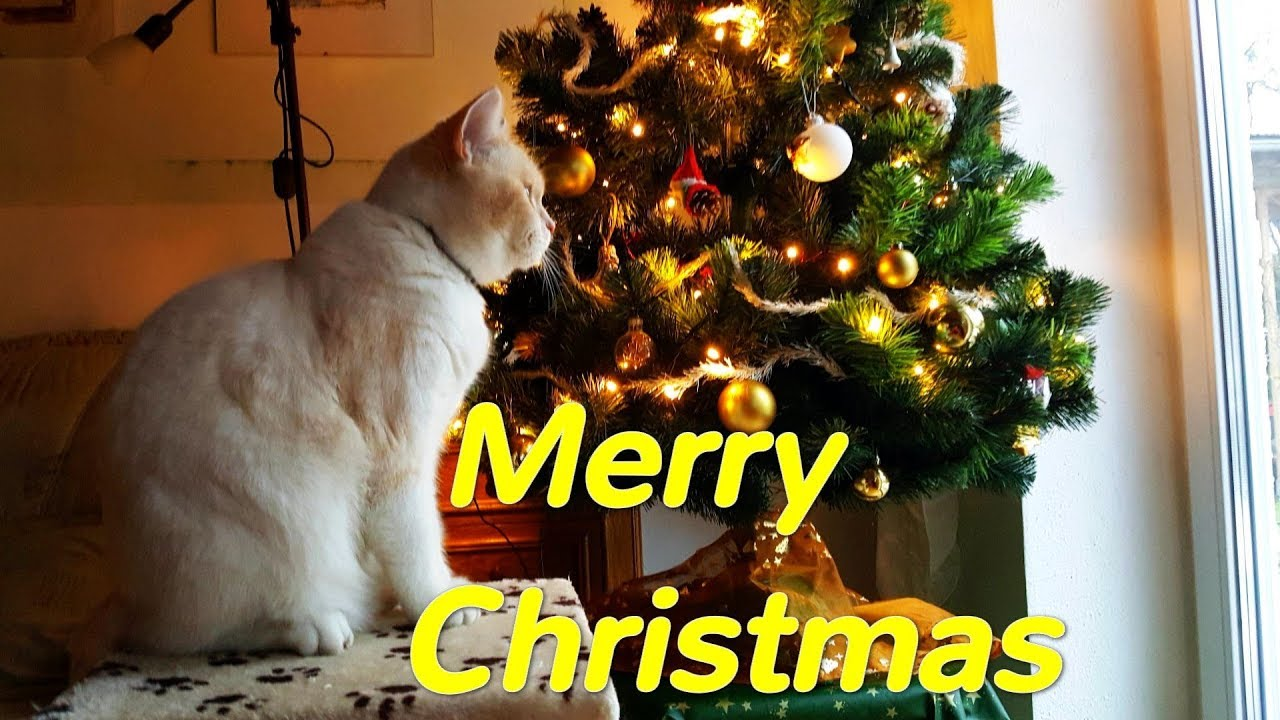 Christmas fairytale with kittens Odin and Oscar - Merry Christmas ...