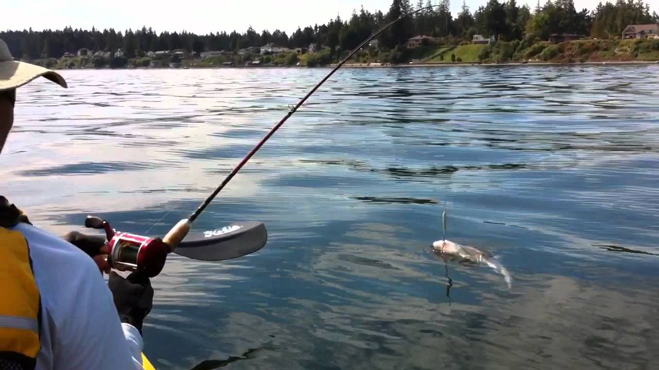 South puget sound kayak fishing youtube for Youtube kayak fishing