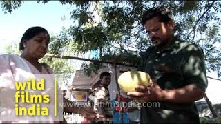 Street vendor selling coconut water - Mysore