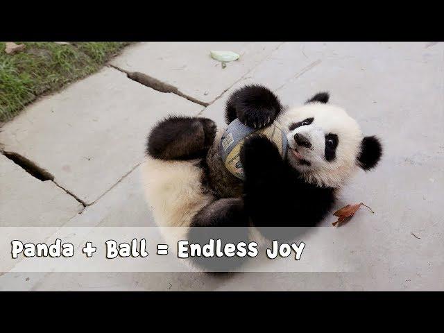 Panda Football Team Join World Cup Football Party | iPanda
