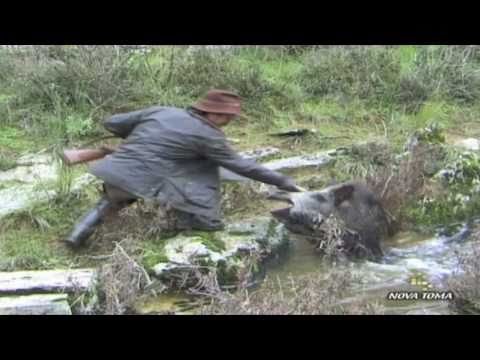 Monterias - Videos de caza mayor  - Todo Jabalí - parte 3