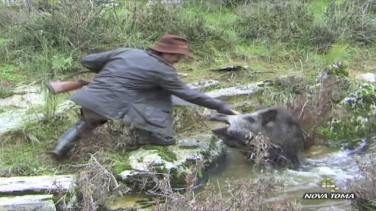 videos de caza de jabali