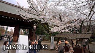 Tokyo sakura  Budokan and Yasukuni shrine・4K HDR