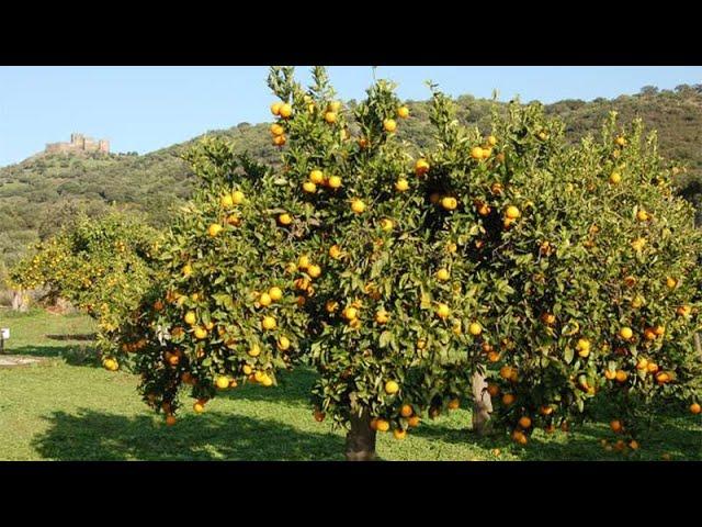 Bearing fruit for God isn't work.
