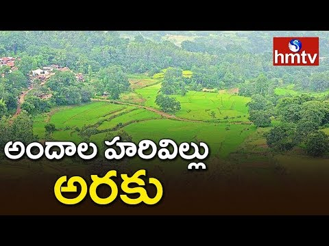 Special Focus On Andhra Ooty Araku Valley | Telugu News | hmtv