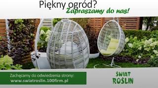 Krzewy drzewa ozdobne nawozy Wyszków Świat Roślin Sklep ogrodniczo - przemysłowy Dąbrowski