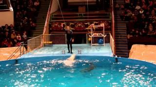 Дельфины в цирке  Алматы (полное выступление)