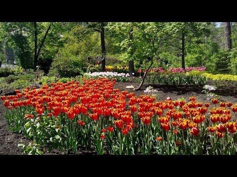 Ботанический сад – хранитель зелёных раритетов и воспитатель новых «зелёных» поколений