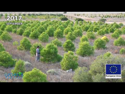 Reforestation anti-desertification in Los Monegros Desert Zaragoza Spain with Groasis
