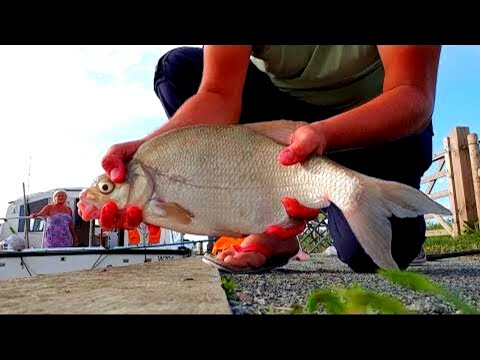 Free Fishing On An Idyllic Holiday - Fishing On The Norfolk Broads Part 2