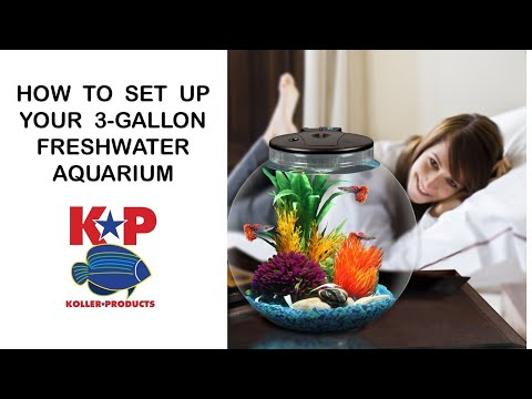 Setting Up Your 3-Gallon Globe Fish Tank (LED & Filter)