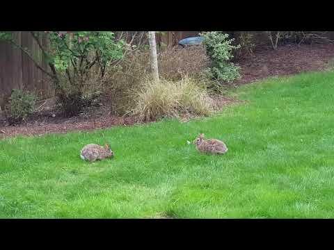 Кролики 20.04.18