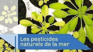 Le champs des possibles | Reportage CNRS