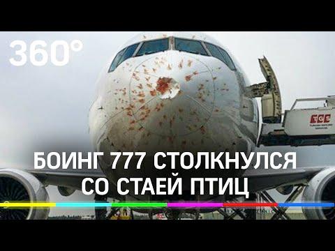 Боинг 777 столкнулся со стаей птиц. Кадры самолета после посадки