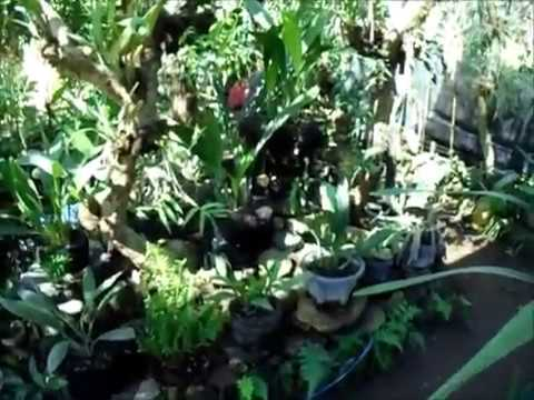 Desain Taman Anggrek Minimalis  sejuknya kolam taman anggrek hitam bagusnya bakalan bonsai