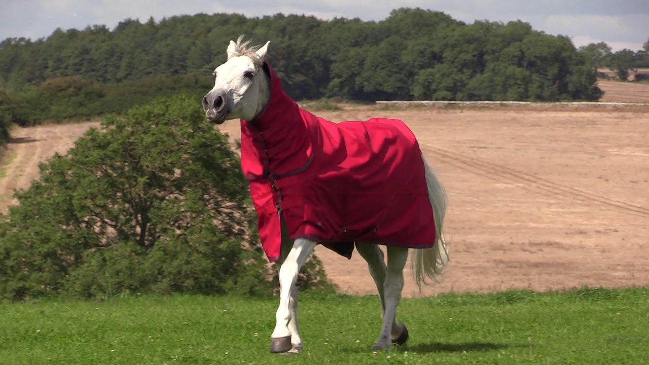 Air Motion Combo Turnout Rug