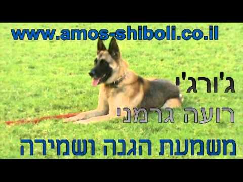 המרכז הכלבני עמוס שיבולי - אילוף כלב לתקיפה ושמירה