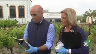 Sanidad Vegetal contra la xylella fastidiosa