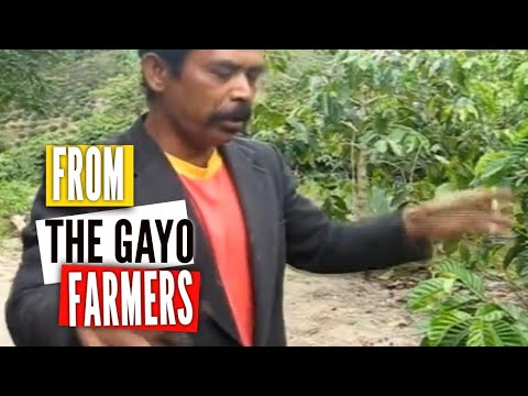 Gayo Coffee Farmers