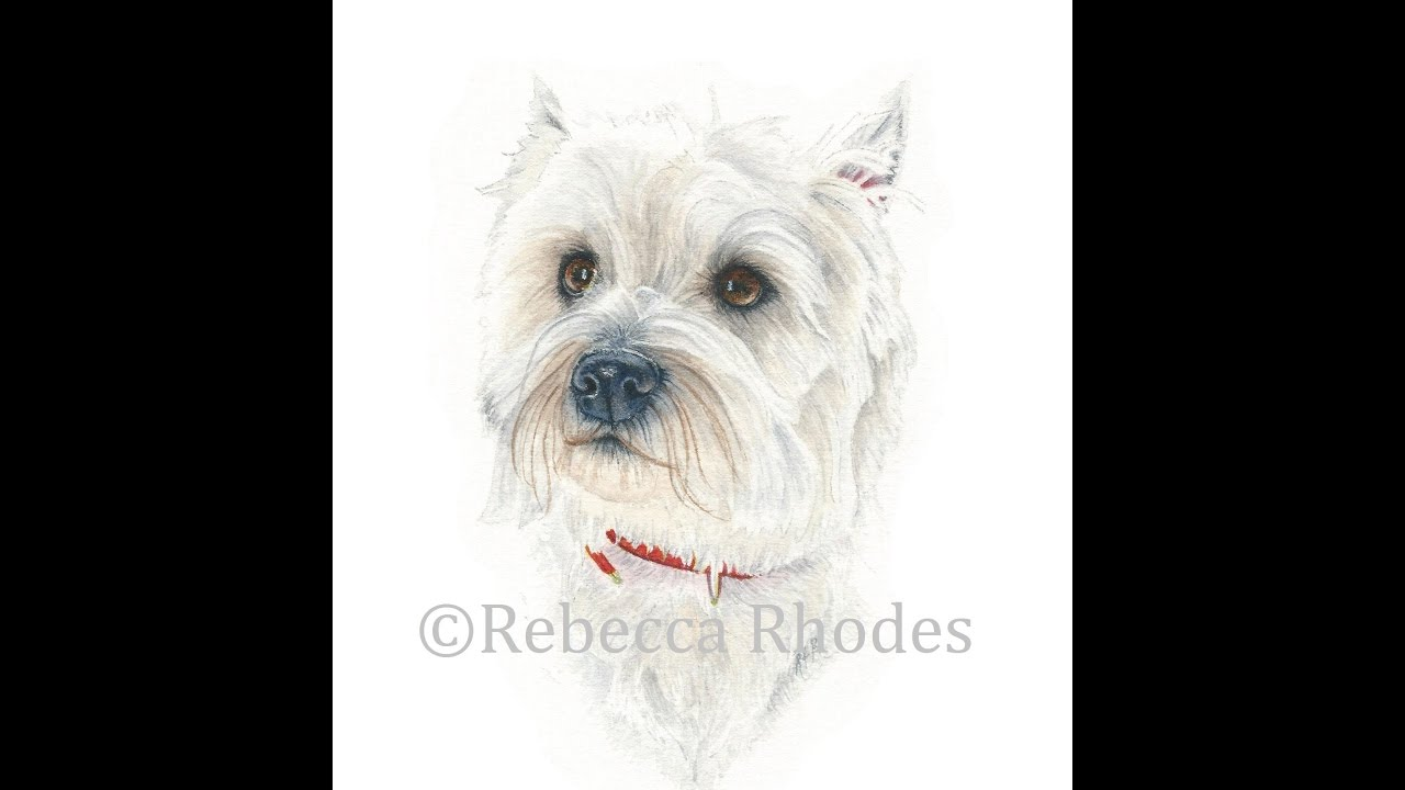 How to Paint a Realistic White Dog in Watercolor